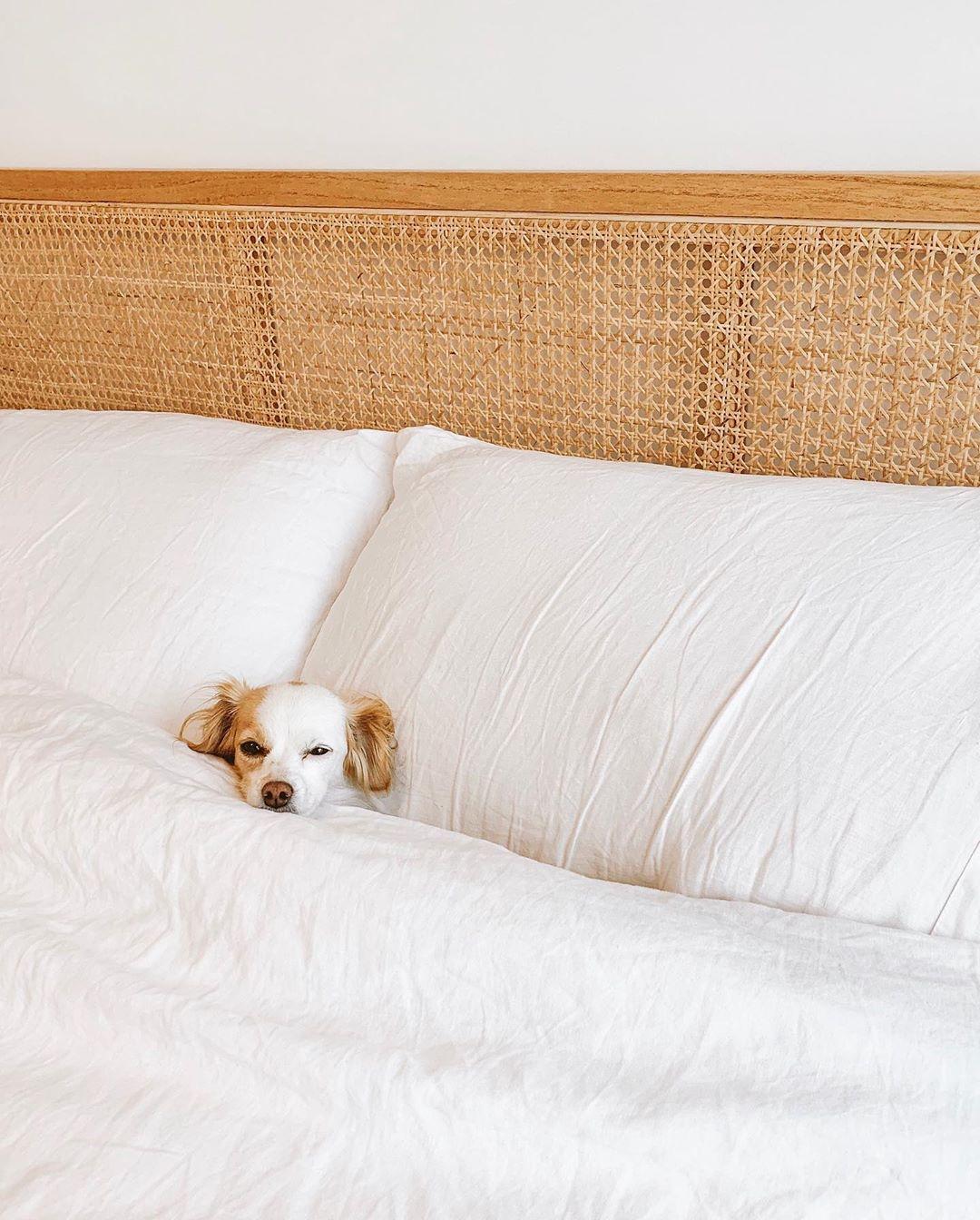 parsleythedog